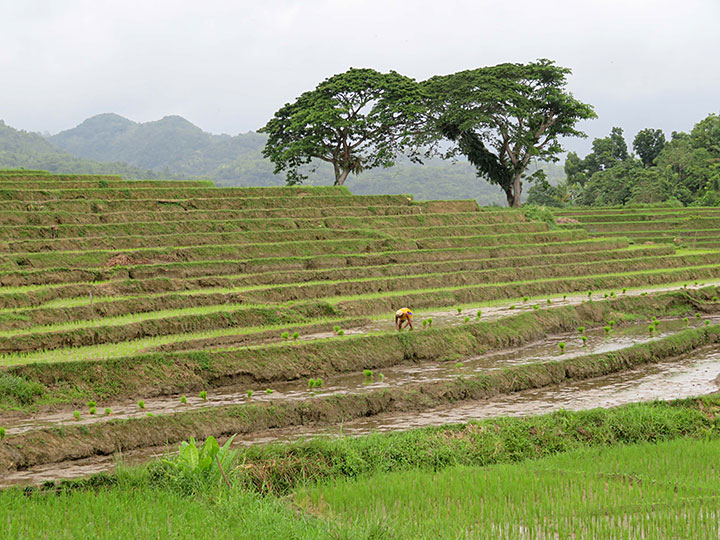 Cadapdapan Rice Terraces