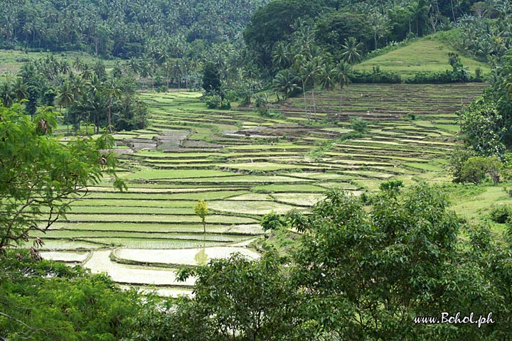 Outer Banks Hotels >> Rice Terraces